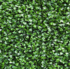 Easy hedge tiles buxus fine dark