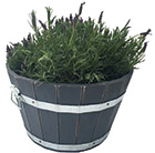 Acacia barrel planter